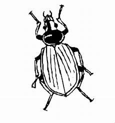 Insekten Malvorlagen Tiere Insekten 00226 Gratis Malvorlage In Insekten Tiere Ausmalen
