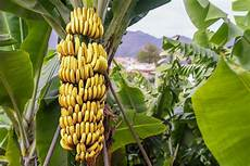 Cing Le Palme - improving working conditions on banana plantations across