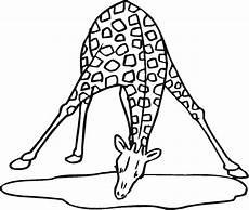 Ausmalbilder Zum Ausdrucken Giraffe Malvorlagen Fur Kinder Ausmalbilder Giraffe Kostenlos