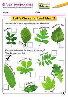 science plants ks1 worksheets 13580 ks1 science plants let s go on a leaf hunt teaching resources