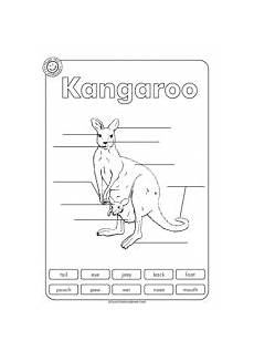 kangaroo labelling animal unit kangaroo craft kangaroo kangaroo information