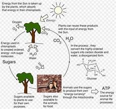 biochemistry biochemistry its scope and exles readbiology com