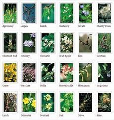 38 fiori di bach fior di bach il giardino dei fiori di bach