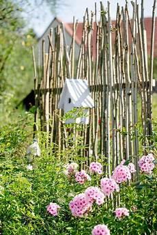 Natürlicher Sichtschutz Im Garten - sichtschutz oder unkonventionelle rankhilfe diy diy