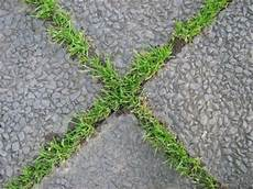 betonplatten auf rasen verlegen betonplatten auf rasen verlegen schau unter die haube