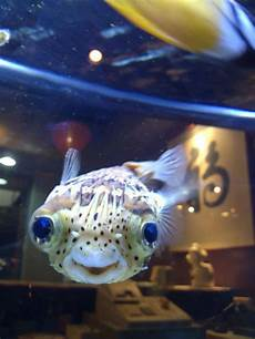 Malvorlagen Unterwasser Tiere Lustig I Think He Likes Me Mit Bildern L 228 Chelnde Tiere