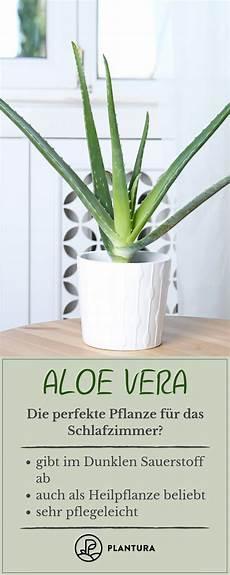 schlafzimmer pflanzen gesund pflanzen im schlafzimmer vorteile nachteile und