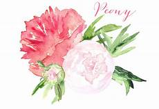 peony clipart peony watercolor clip graphics creative market