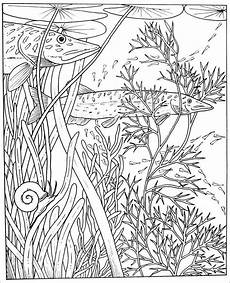 pike coloring pages coloringbay