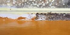 Ameisen Bekämpfen Wohnung - ameisen in der wohnung diese mittel helfen ameisen