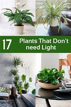 17 plants that don t need light you can grow indoors plantsthat can grow indoors without