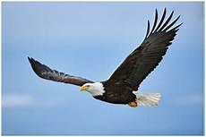 Hidup Ala Burung Elang