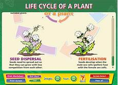 life cycle of a plant content classconnect