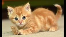 Anak Kucing Lucu Bermain Bersama Teman Teman