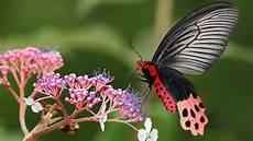 Hd Hintergrundbilder Schmetterling Blume Ast Bokeh