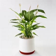 Airy Pot Luftreiniger Blumentopf Fr Allergiker