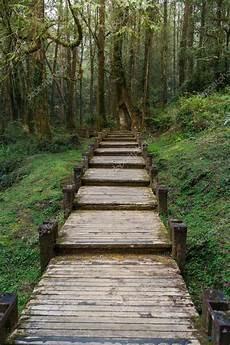 chemin bois jardin un chemin de bois 224 alishan national scenic area