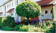 baum für vorgarten baum umpflanzen garten rasenpflege selbst de