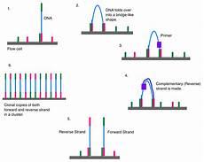 flow cell illumina illumina dye sequencing