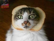 Inbread Cats In Bread