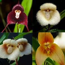 10 pcs new orchid seeds beautiful plant flower garden