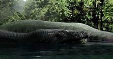 Ular Raksasa Panjang 15 Meter Hidup Di Hutan Hujan Tropis