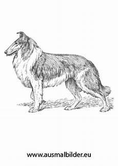 Ausmalbilder Hunde Border Collie Ausmalbilder Stolzer Collie Hunde Malvorlagen