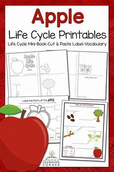 apple life cycle worksheets mamas learning corner