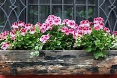 Flower Box Arrangements Summer Window And Balcony Decor