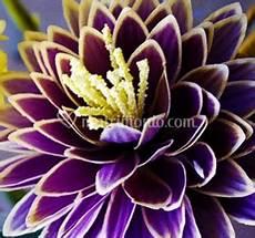 fiori esotici foto fiori esotici di piante e fiori mizzoni fotos
