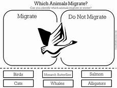 animal migration worksheets 14057 animal migration worksheet by green apple lessons tpt