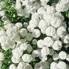 White Flowers Hd Images by Luz De Umbanda O Uso Das Flores Na Umbanda