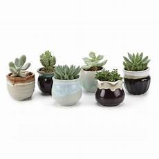 vasi per cactus 6 mini pots 2 5 inch ceramic plant cactus flower container