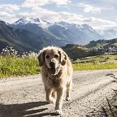 mit hund ferien mit hund in den b 252 ndner bergen graub 252 nden ferien