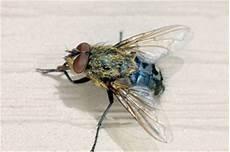 Mouches Moustiques Traitement Et Conseils