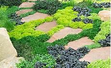 plante couvre sol persistant les couvre sols pour remplacer le gazon