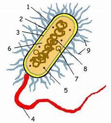 Biologi Gonzaga Pre Test Bakteri