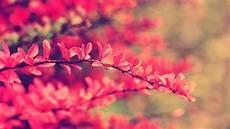 sfondo a fiori sfondi fiori hd sfondi