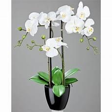 wei 223 e orchidee wohnen haus garten reader s digest