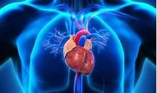 Organ Organ Pokok Pada Hewan Dan Tumbuhan Lengkap
