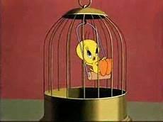 in gabbia gatto silvestro denuncia titti il canarino per reato di