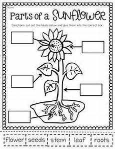 worksheets plants and seeds 13503 free this is a simple seed observation journal students will predict what their seed will grow