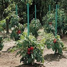 tuteur tomate pas cher tuteur tomate pas cher