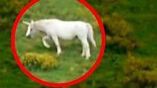 why don t we unicorns today this ballsy unicorns on best unicorn sightings