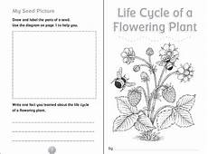 worksheets on plants cycle 13606 flowers and their cycles worksheet answer key best flower site