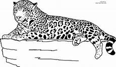 realistic animal jaguar coloring pages zoo animal