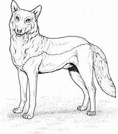Ausmalbild Wolf Baby Ausmalbilder Baby Wolf
