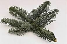 weihnachtsbaum nobilis tanne abies nobilis christbaum