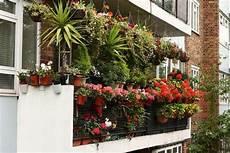 elpflanzen und hängepflanzen garten balkon bepflanzen praktische tipps und wichtige hinweise