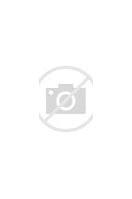 Stella Pulpo